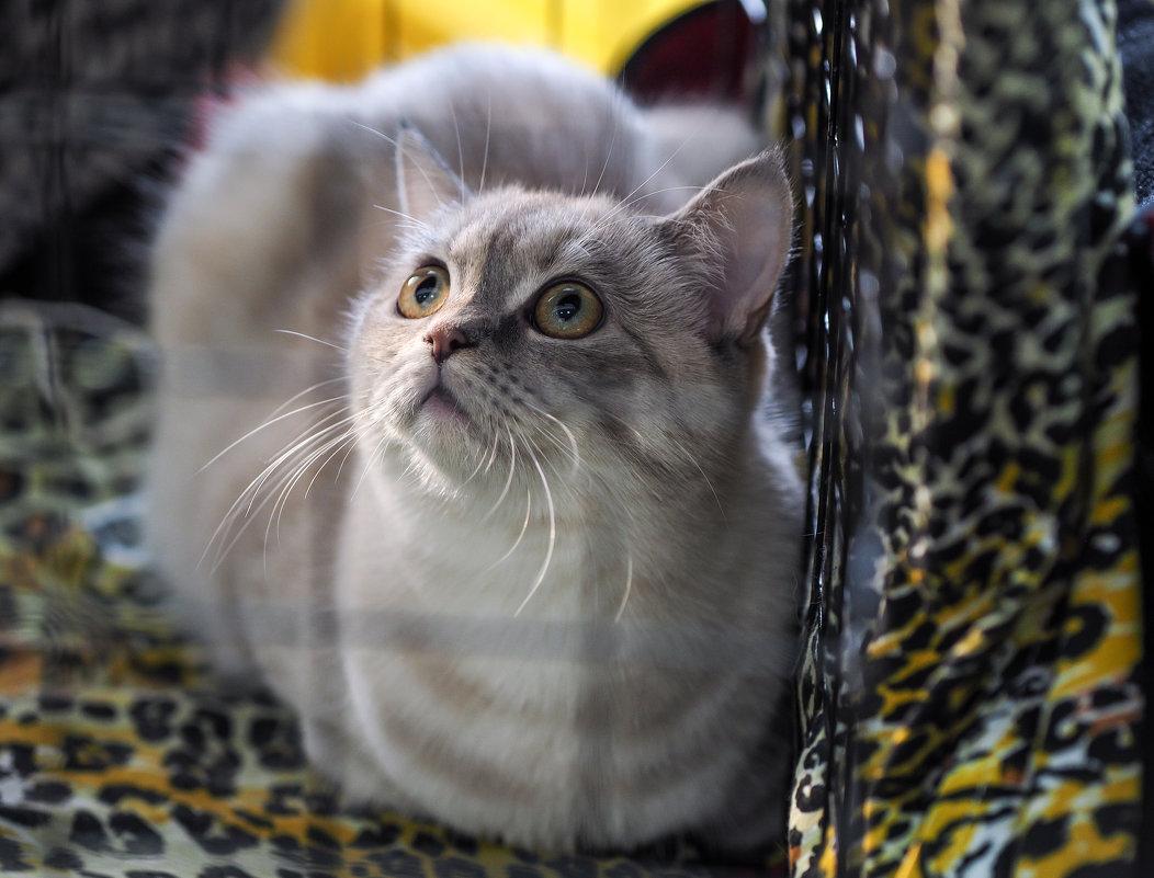 Выставка кошек - Андрей Зайцев