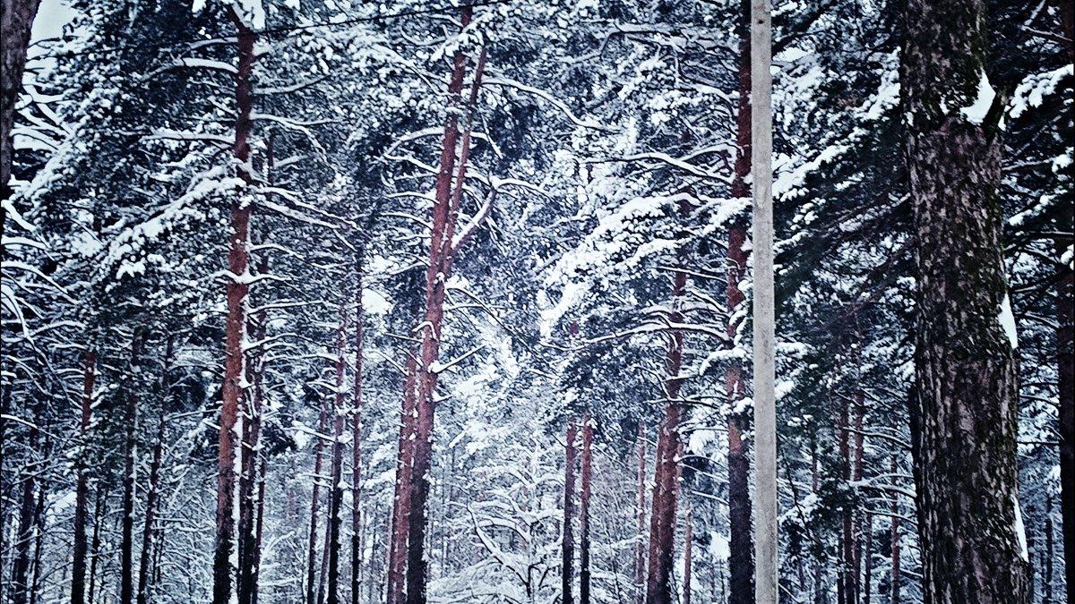 Лесной пейзаж - Марина Иванова