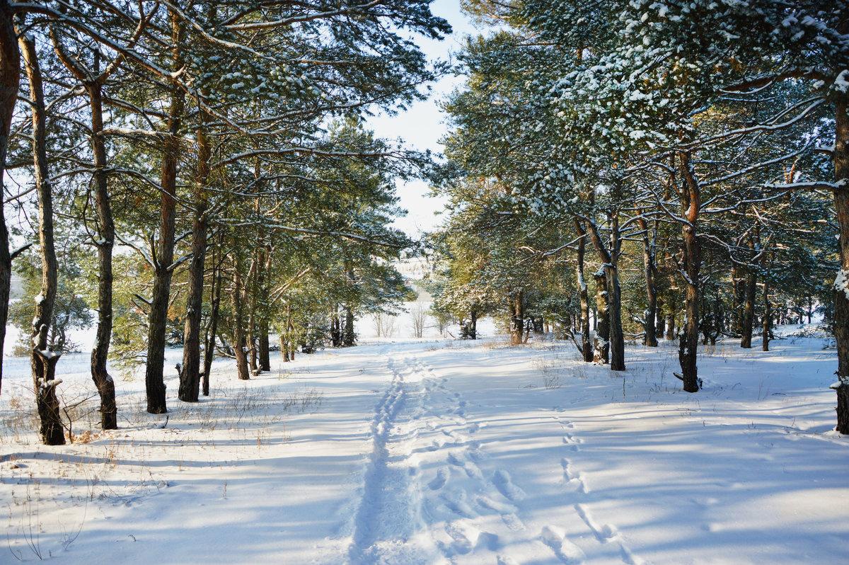 Зимний лес 2 - Наталья Величко