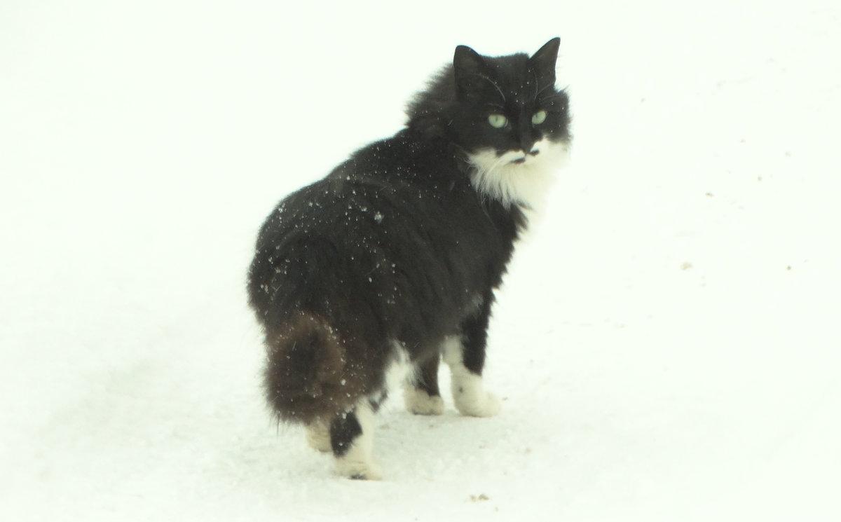 снежный кот - Михаил Жуковский