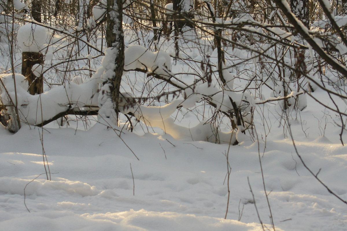 Мороз и солнце - Олег Пучков