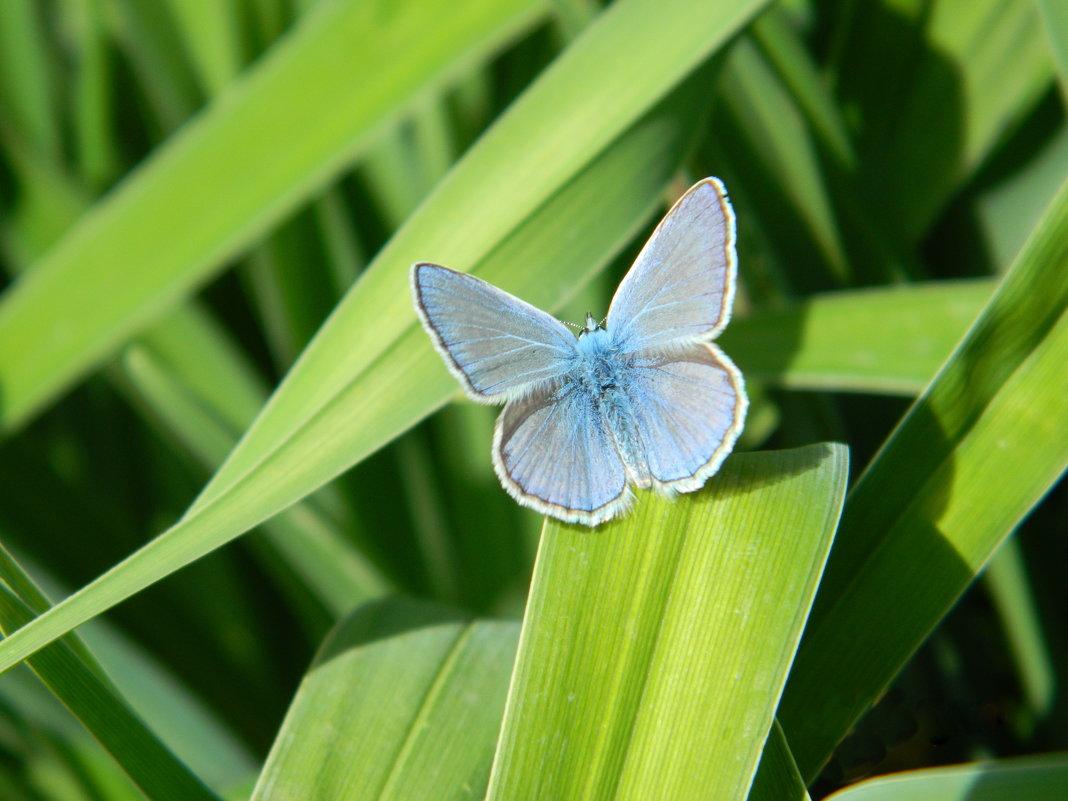 Бабочка - Юлия Жогина