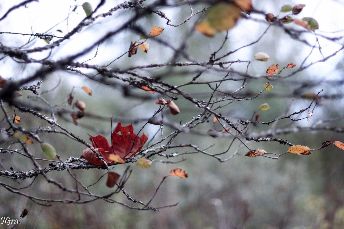 грустная осень - Ирина Гракова