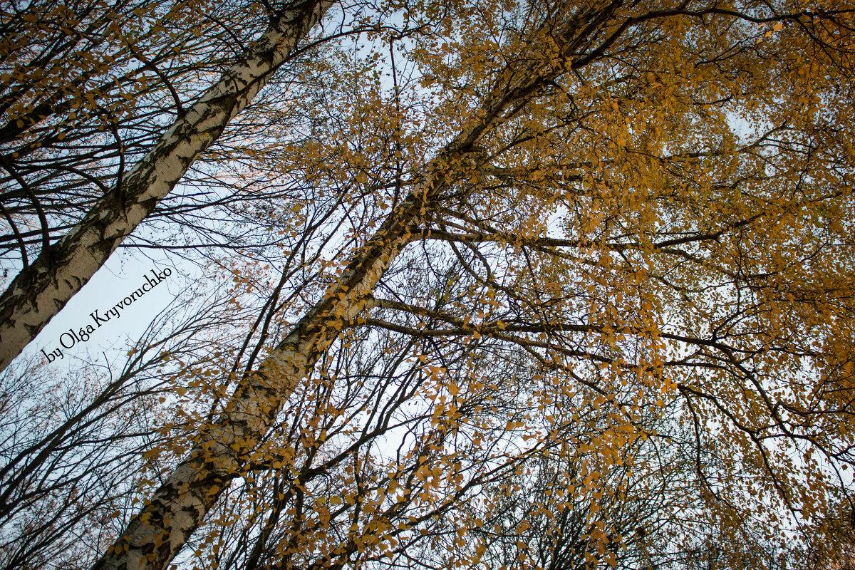 Осень - Ольга Криворучко
