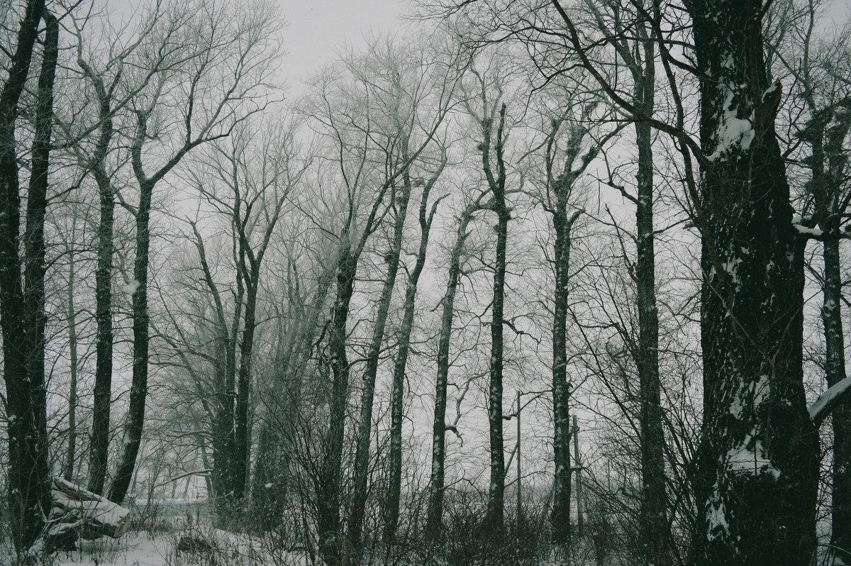 Зима) - Alina Mazitova