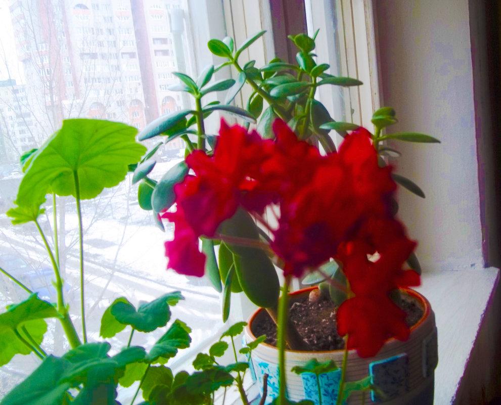 Когда за окном лютая зима - Владимир Ростовский