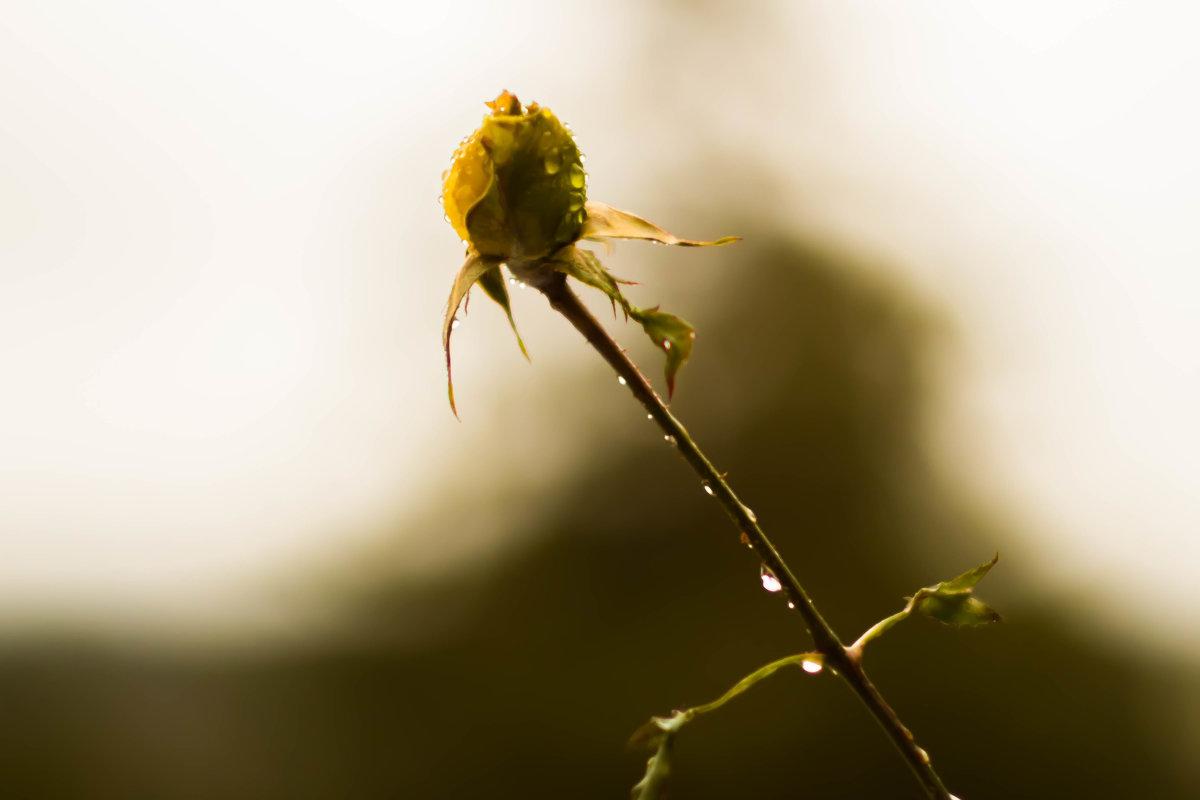 Цветок - Елена Селина