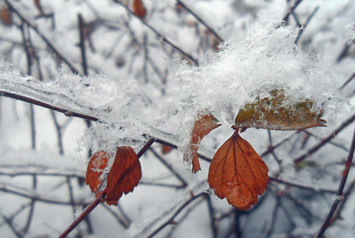 Зима. - Наталья