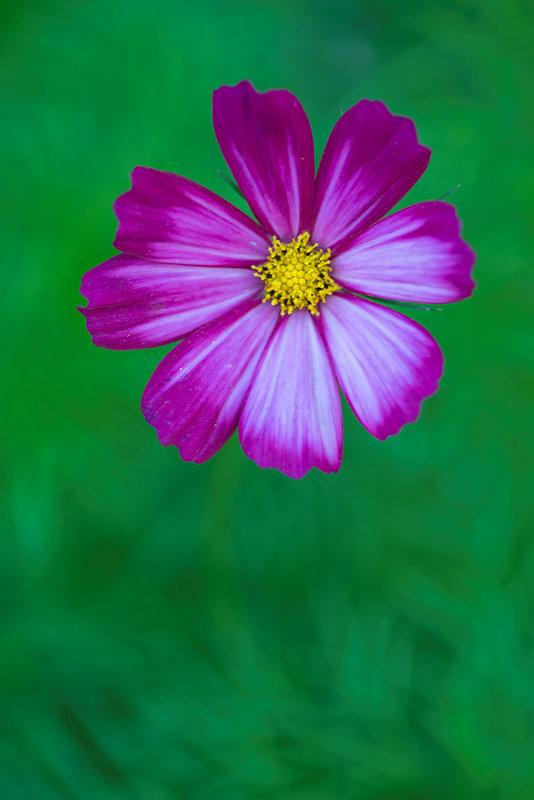 Портреты цветов - Игорь Герман