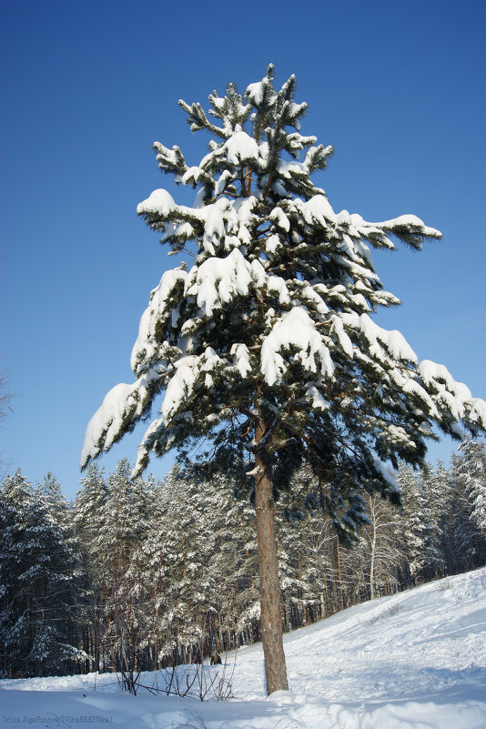 В зимнем наряде - nika555nika Ирина