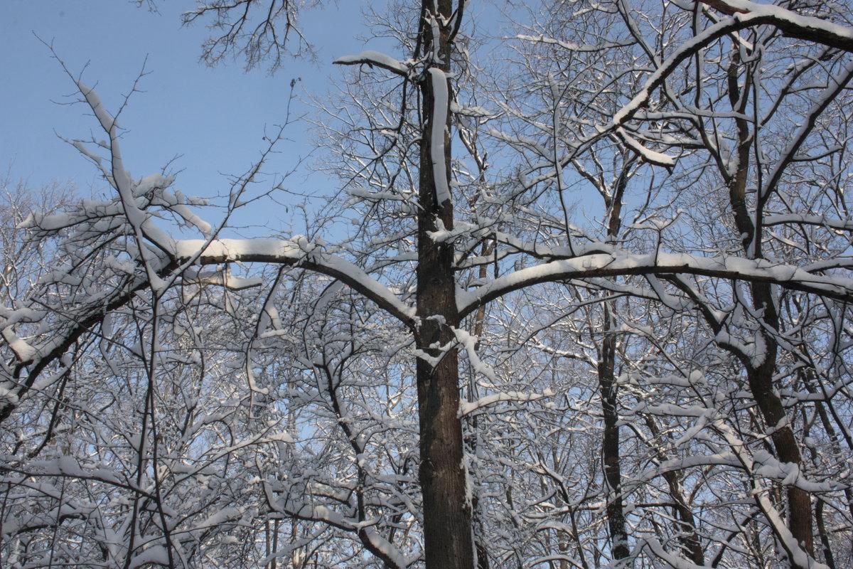Зимний лес - L A V