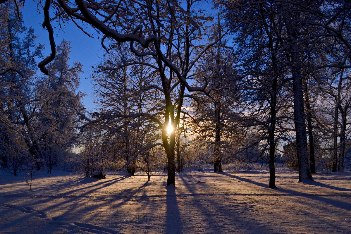 Зимнее солнце. - Дарья Гречина