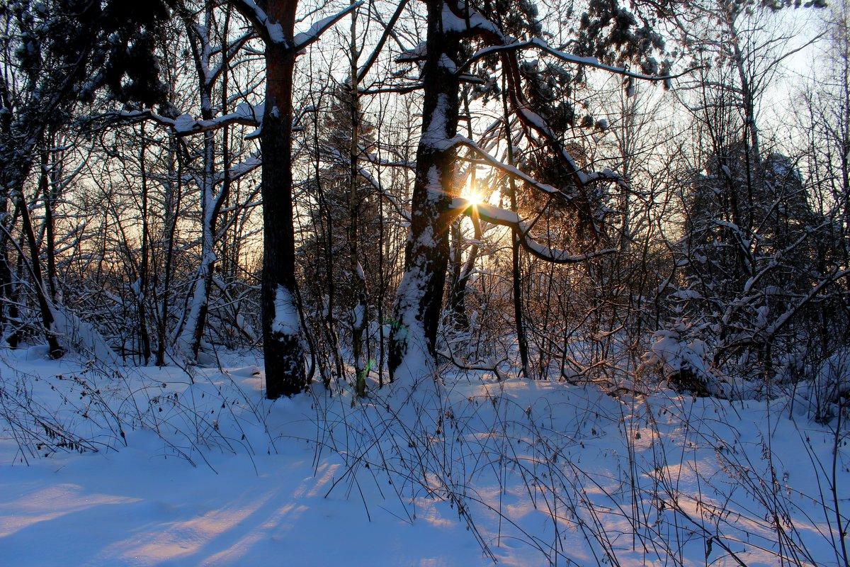 В зимнем лесу - Катя Бокова