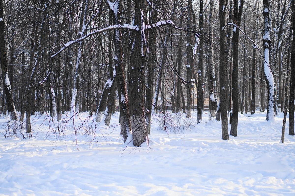 зима - Александр Тверской