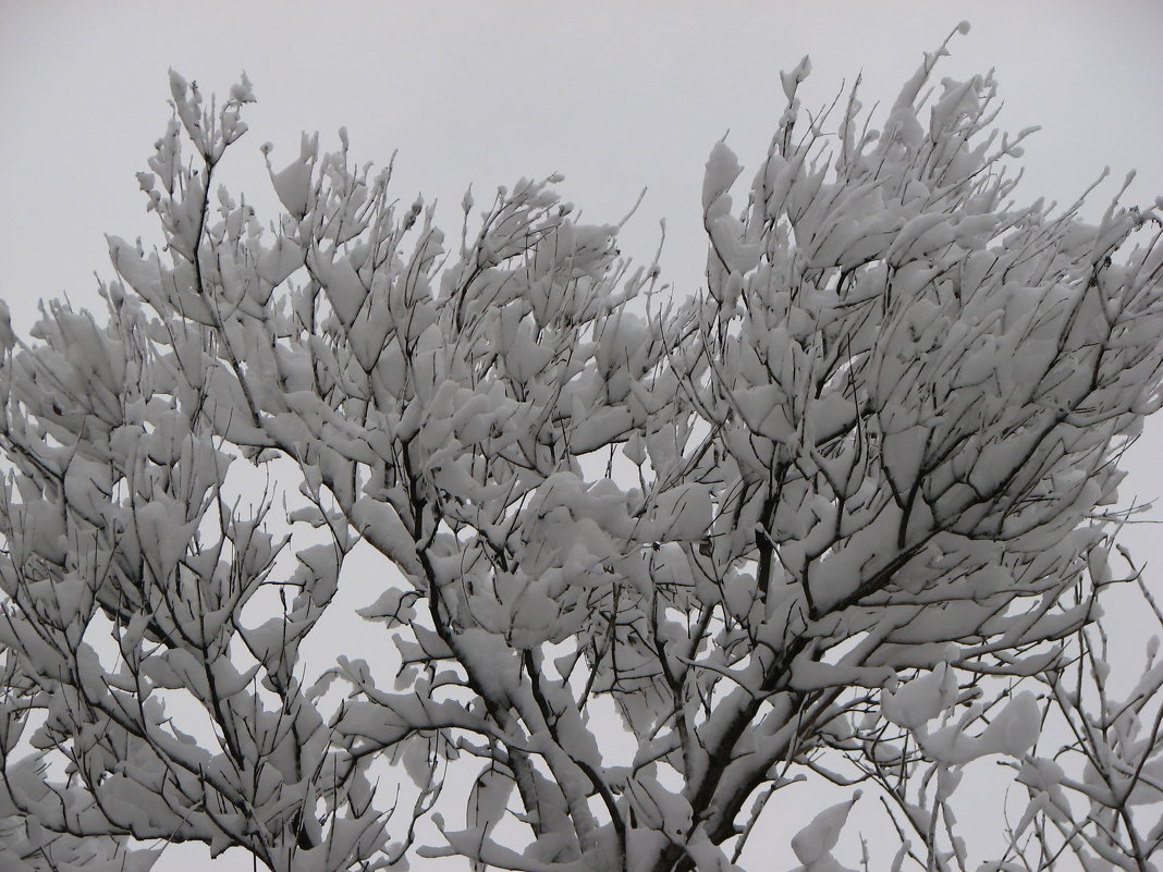 Снежность 1 - Сергей Трусов