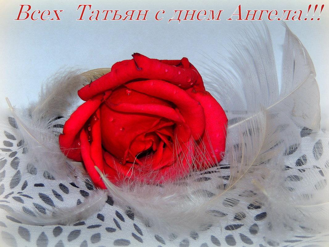Поздравление всем Татьянам,Танечкам,Танюшам!!!!!!!!!!!! - Павлова Татьяна Павлова