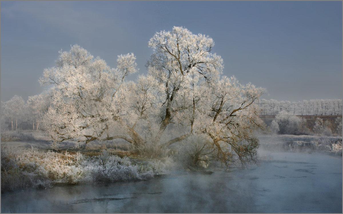 Любимое дерево на Пехорке - Olenka