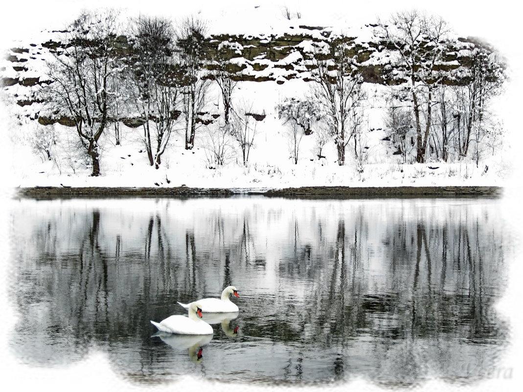 Лебеди - veera (veerra)