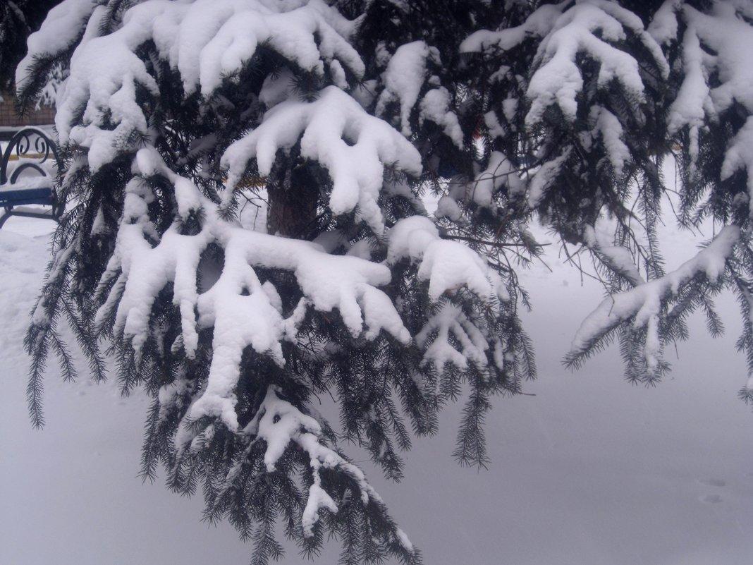 Снежные лапки - Елена Семигина