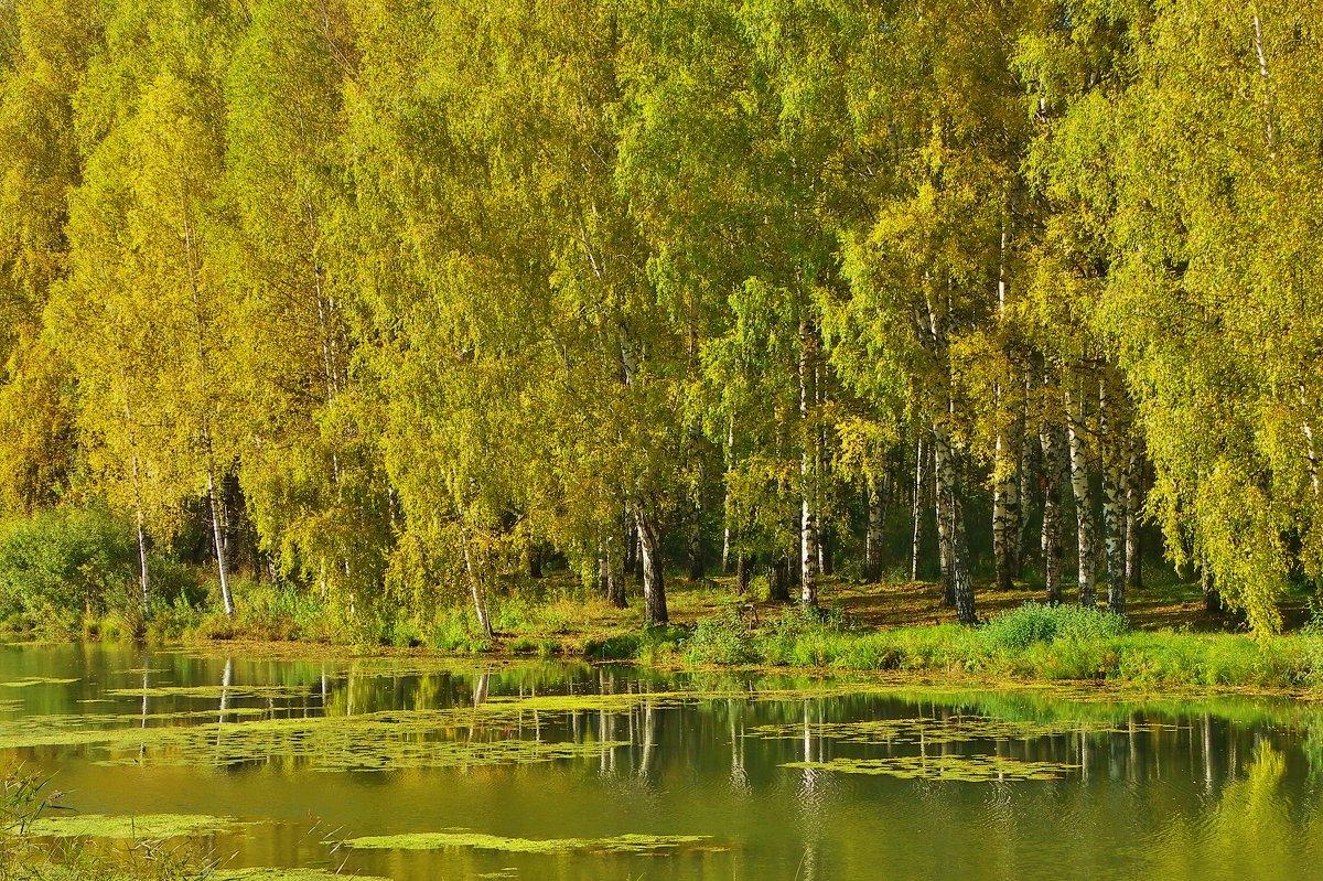Осенние наряды - Святец Вячеслав