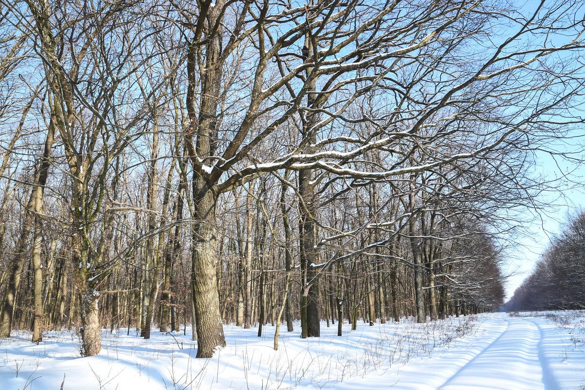 Деревья в зимнем лесу - Татьяна