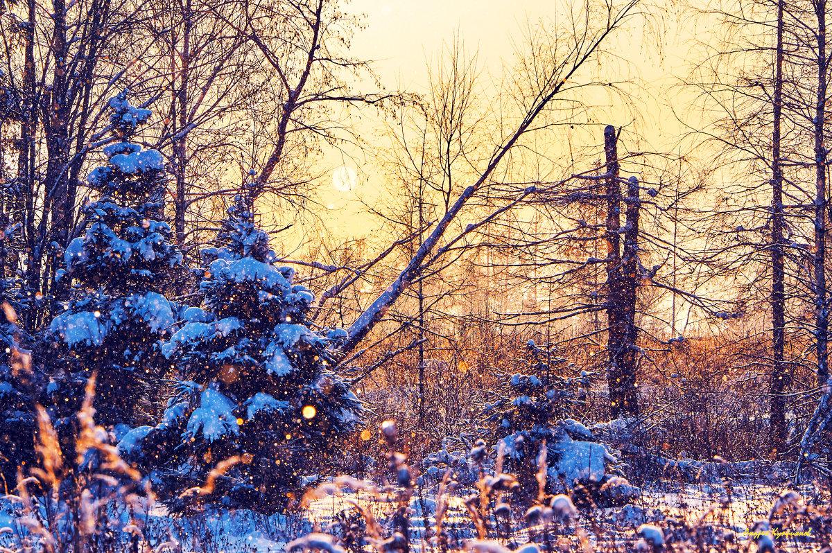 В зимним лесу - Андрей Куприянов