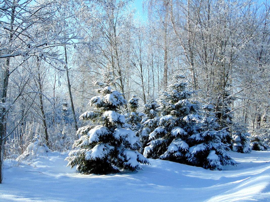 Лесные красавицы - Anna P
