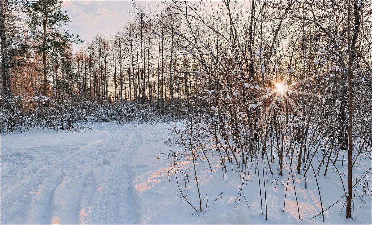 Зимнее солнце - Любовь Потеряхина