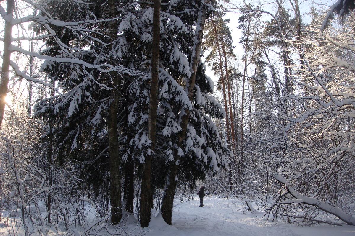 Зимняя красота. - Antonina