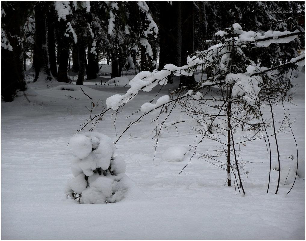 в лесу родилась ёлочка - 2 - sv.kaschuk