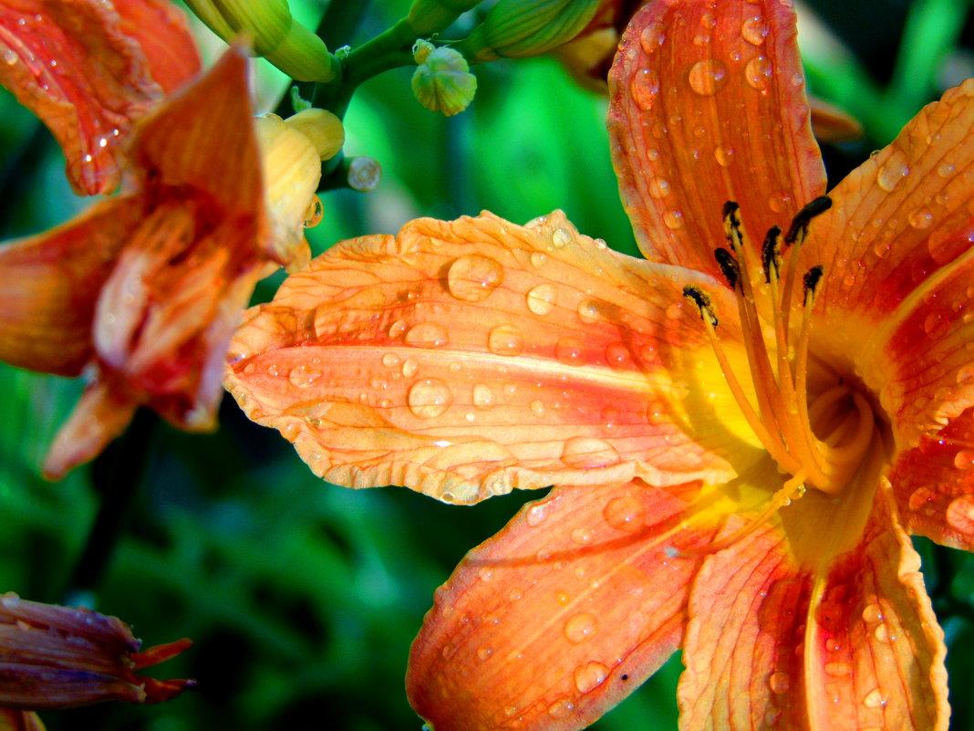 После дождя - Anna P