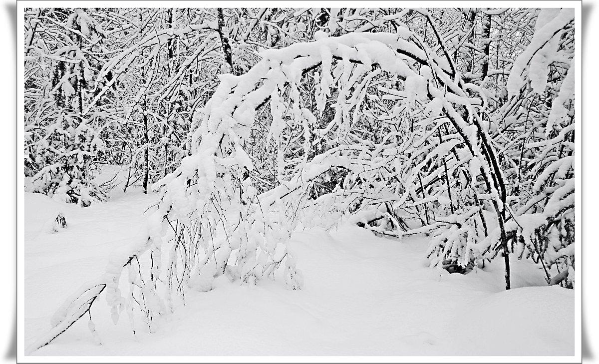 Зимние этюды - Любовь Чунарёва