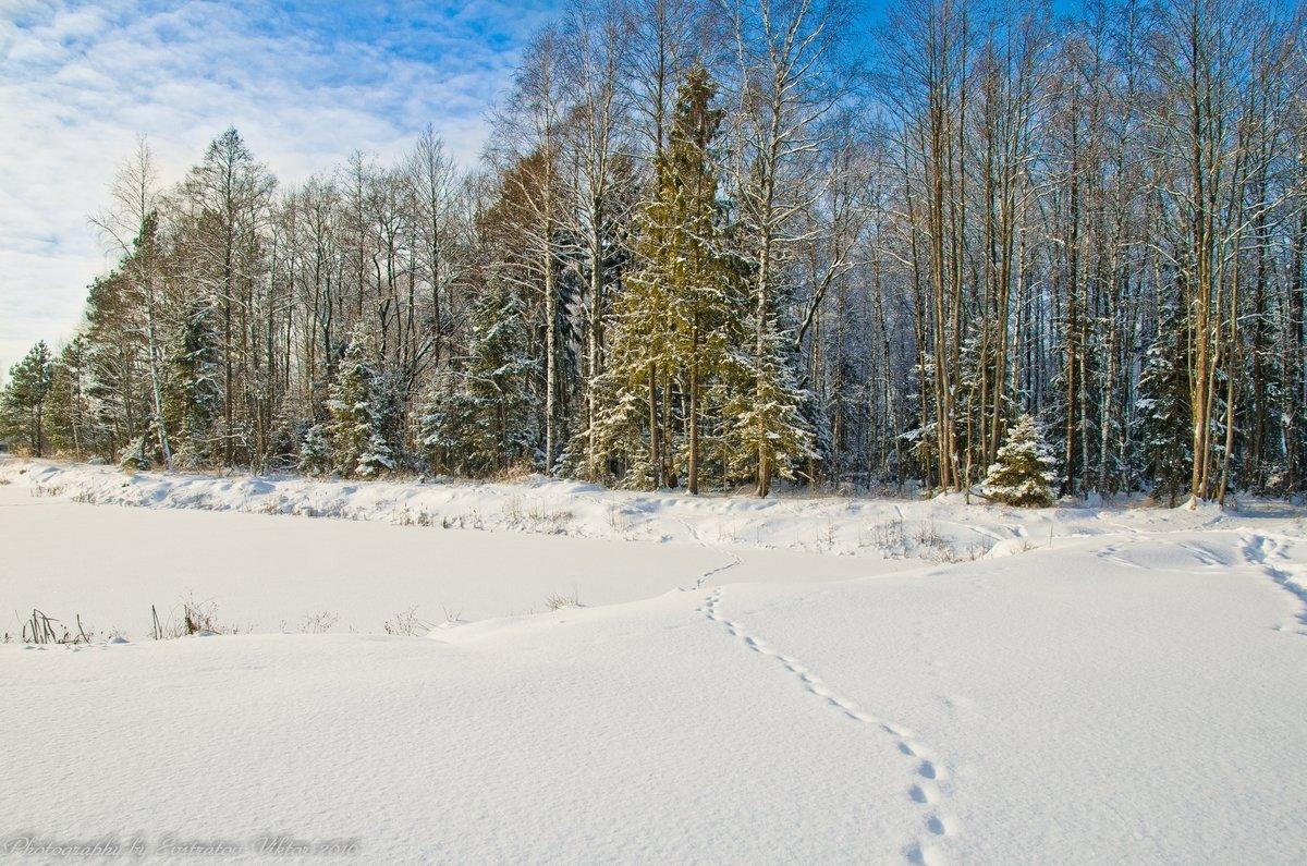Зимний лес. - Виктор Евстратов