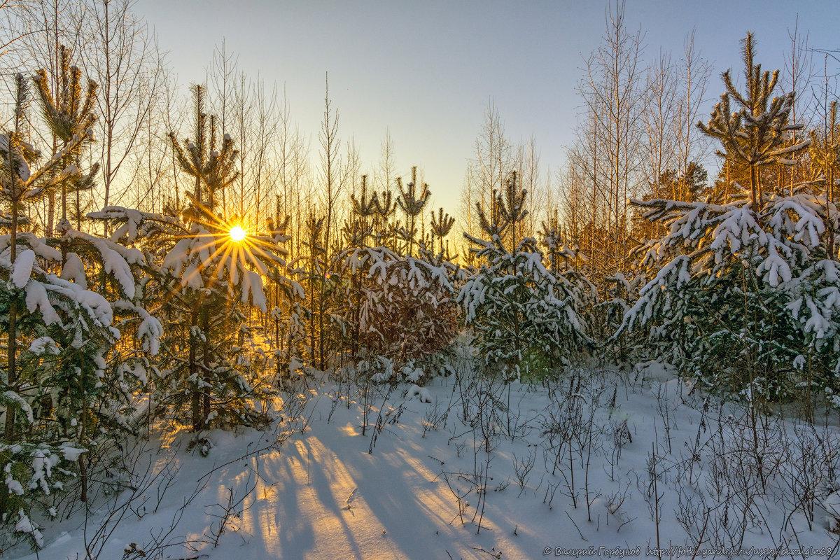 Лесной хоровод - Валерий Горбунов
