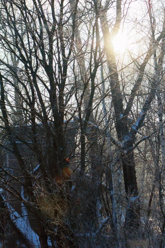 Зимнее солнце - Светлана Трофимова