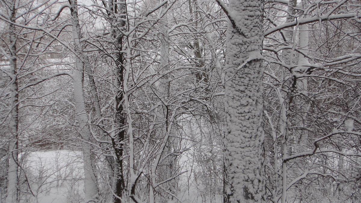 февраль - владимир