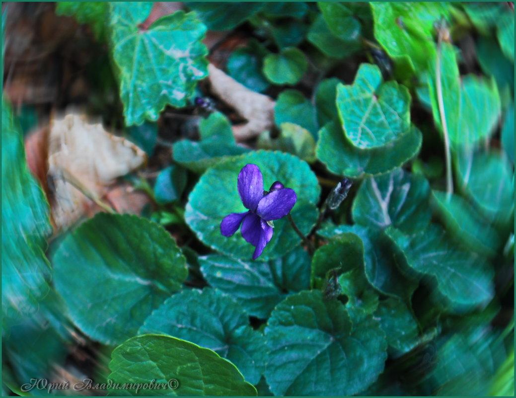 первый цветочек января..... - Юрий Владимирович