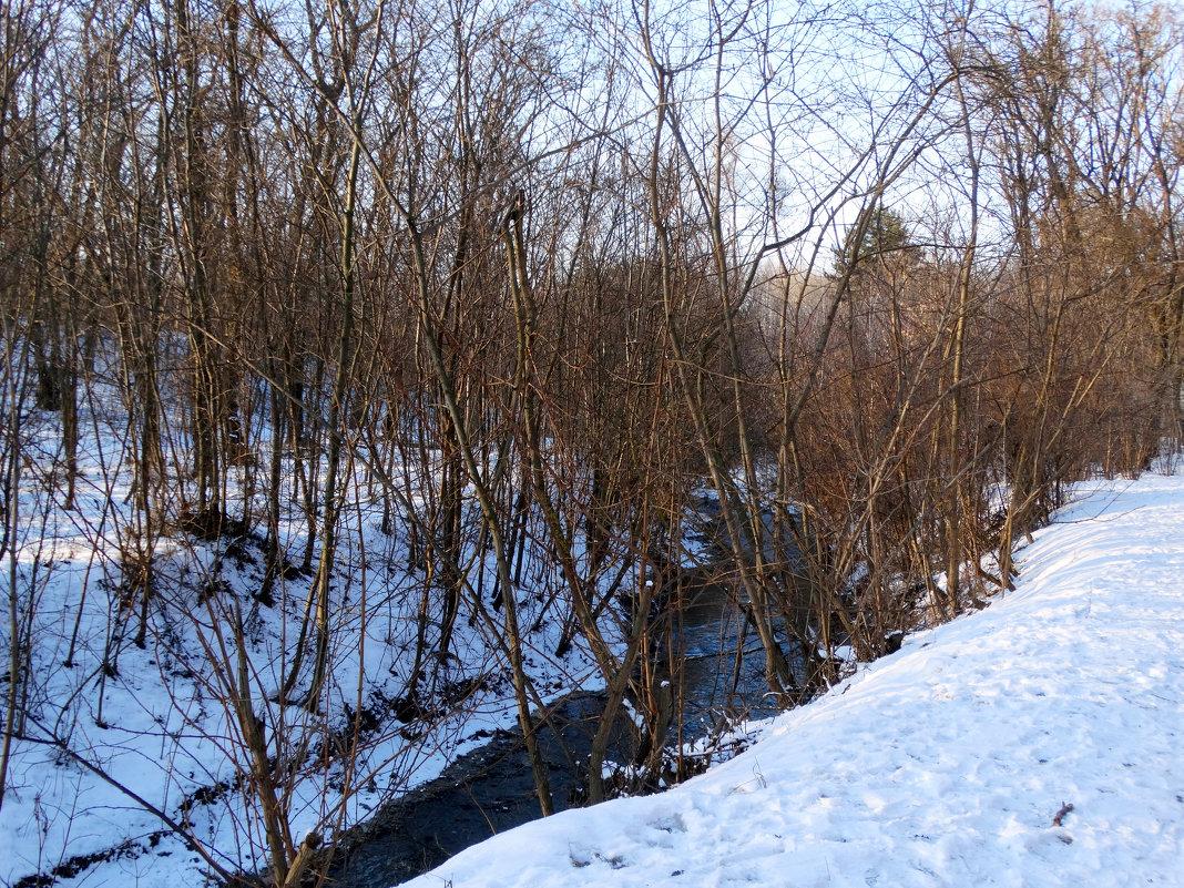 Январь,прогулка в лесопарке... - Тамара (st.tamara)