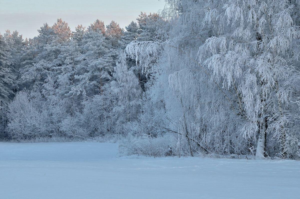 Сказочный лес.. - Юрий Анипов