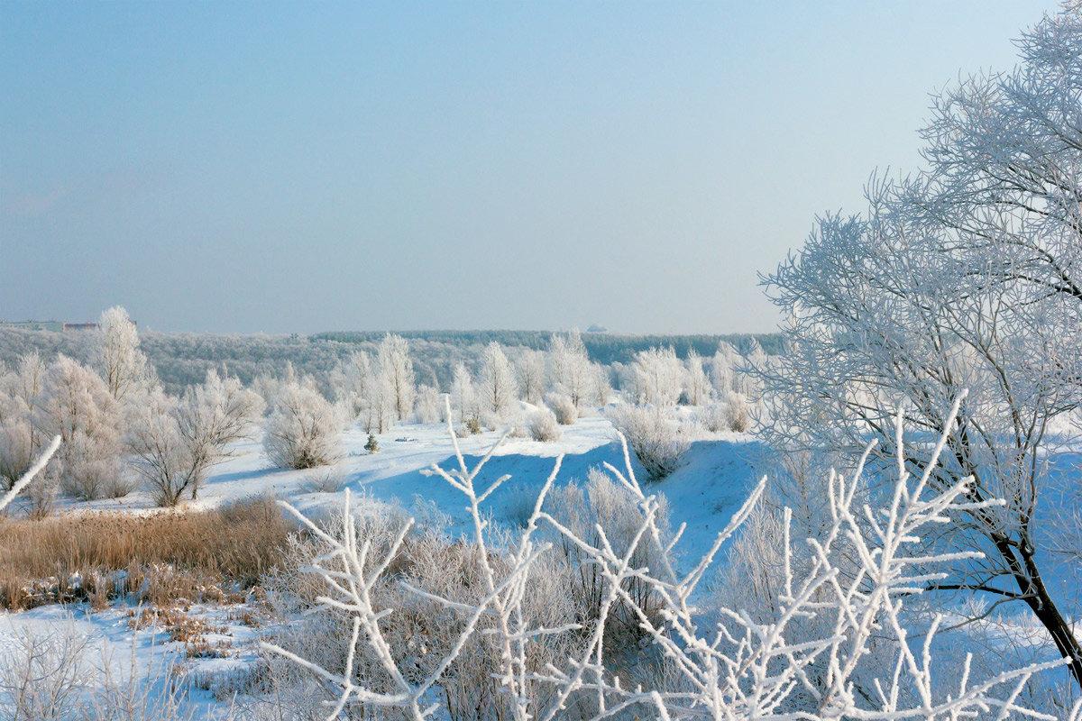 Зимнее утро - Юрий Стародубцев