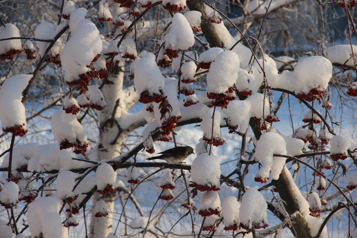 Зима - никита кичапин