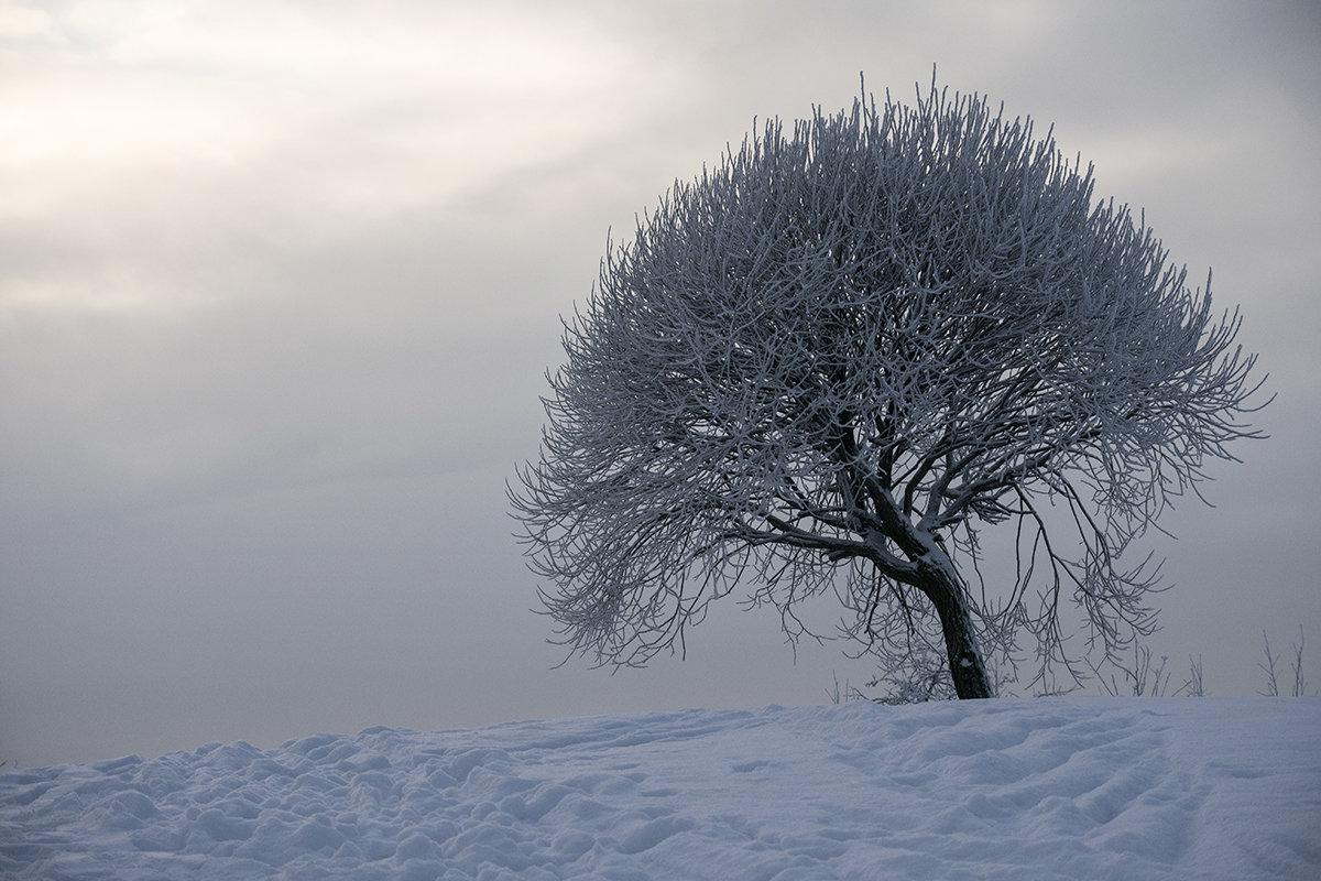 Дерево зимой - VL