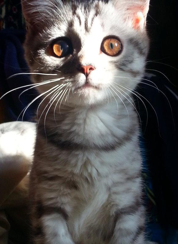 Что думает Ваша кошка? - Marina