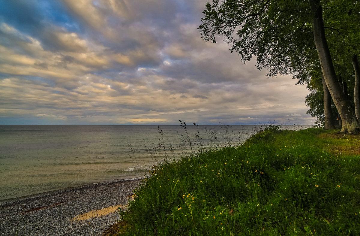 море и лес - Марат Макс