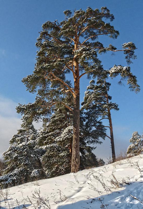 мороз и солнце - Galina