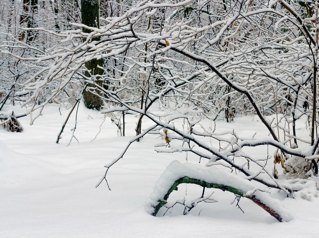 Зимняя природа в лесу.. - Юрий Стародубцев
