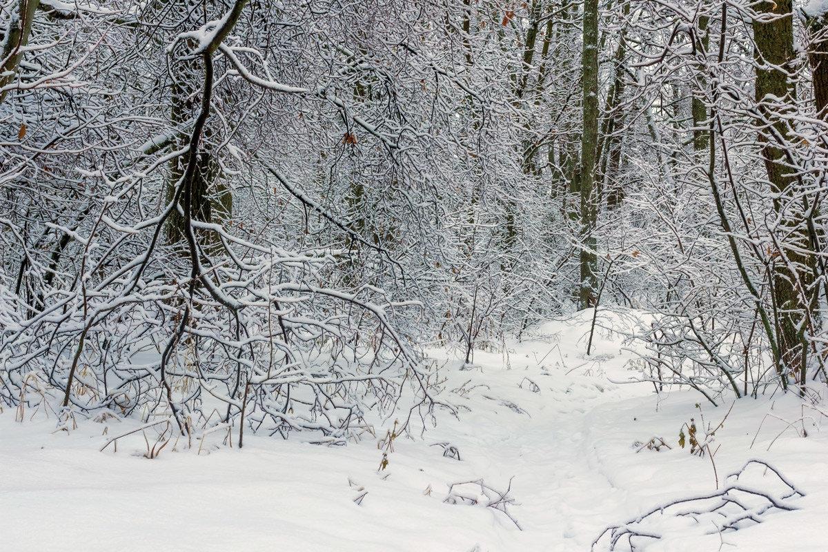 Ветка в снегу.. - Юрий Стародубцев