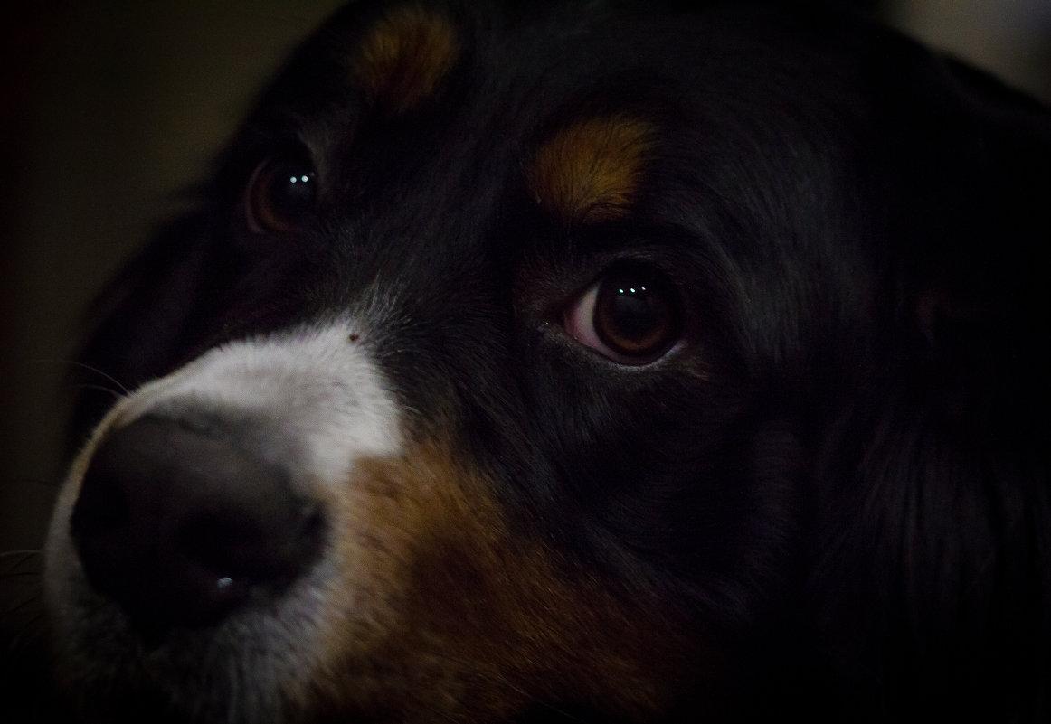 Глаза собачьи... - Дмитрий Шатров