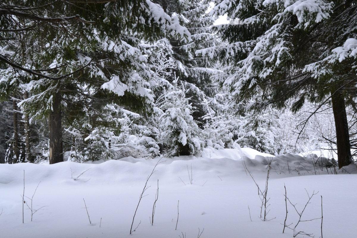 зимний лес - petyxov петухов