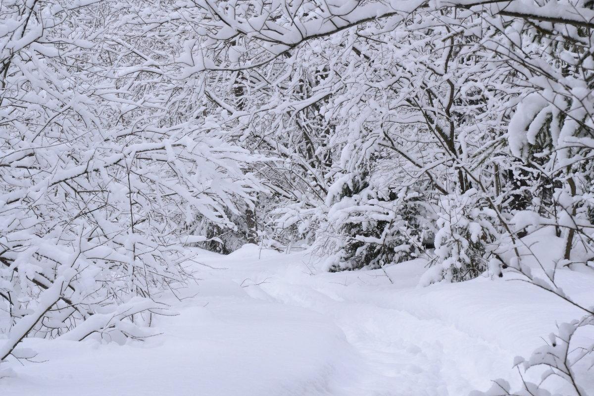 после снегопада - petyxov петухов